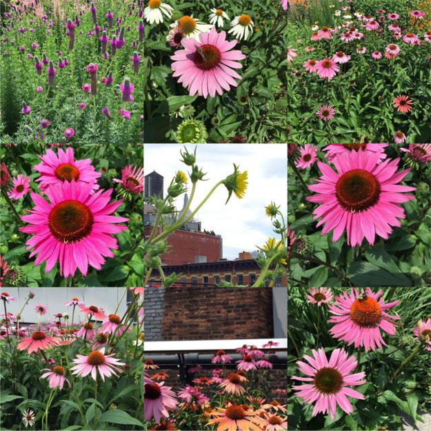 בפארק המרחף מעל גגות צ'לסי, גינות הפרחים הענוגות, שנשתלו במקום פסי הרכבת הישנים.