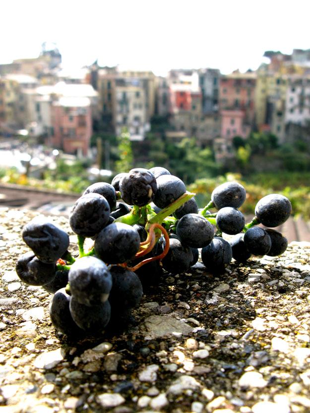 צינקה-טארה-איטליה-ספטמבר-2008-719
