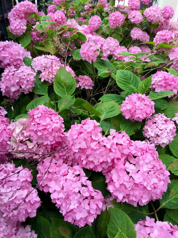 פרחים בלונדון