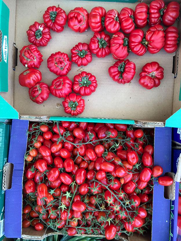 זנים שונים של עגבניות בשוק האיכרים