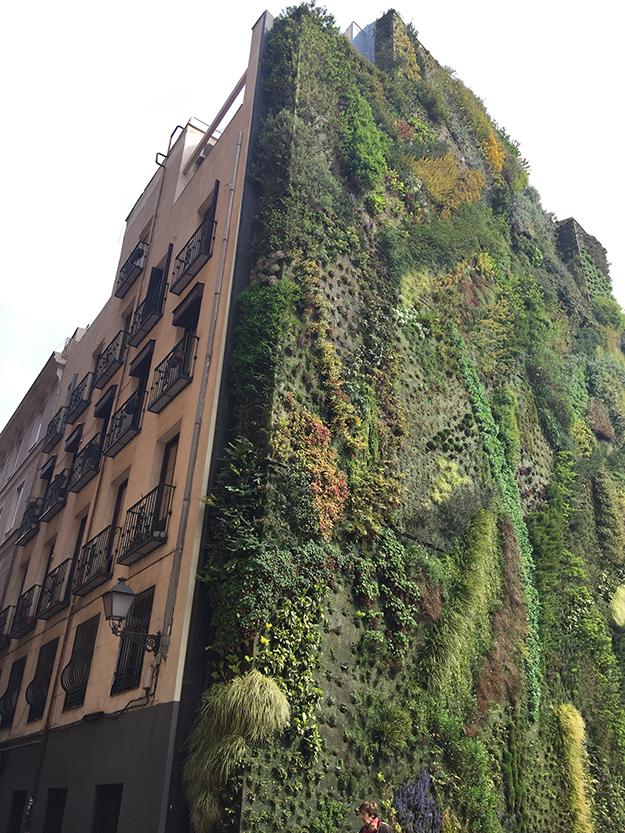 קאישה פורום מדריד, מרכז אמנות גדול, על צלע הבניין צומחת גינה אנכית מפורסמת, הכי מצולמת באינסטגרם