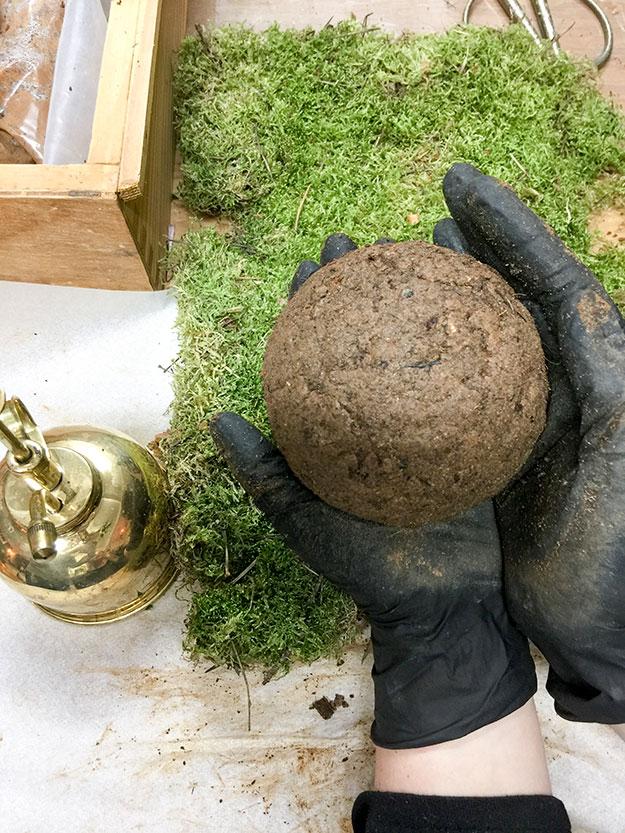 כדור בוץ מוכן לשתילה