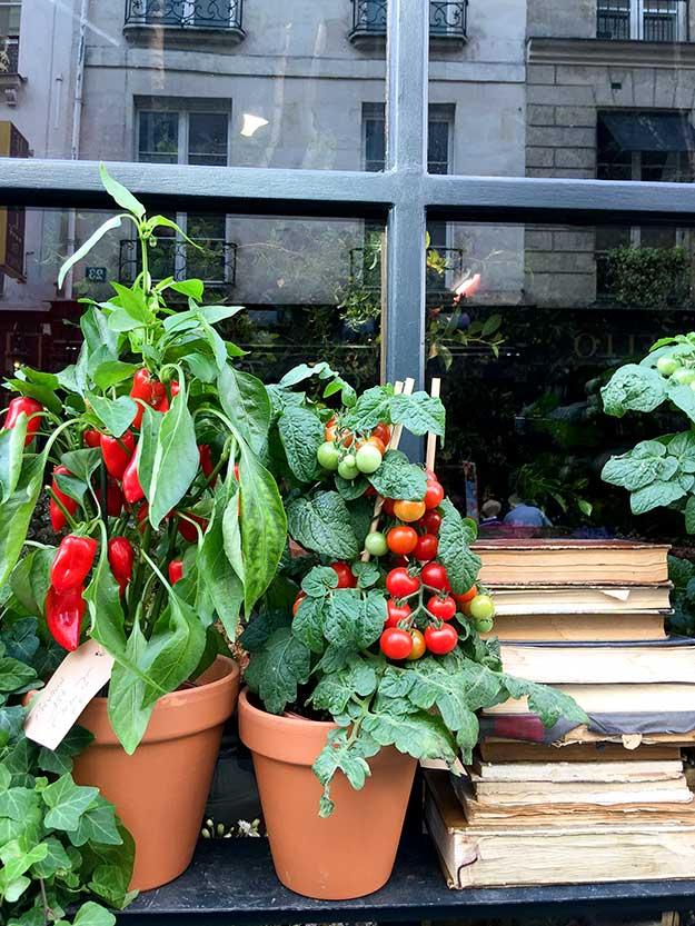 שתילי עגבניות בחלון הראווה של החנות הפונה לרחוב