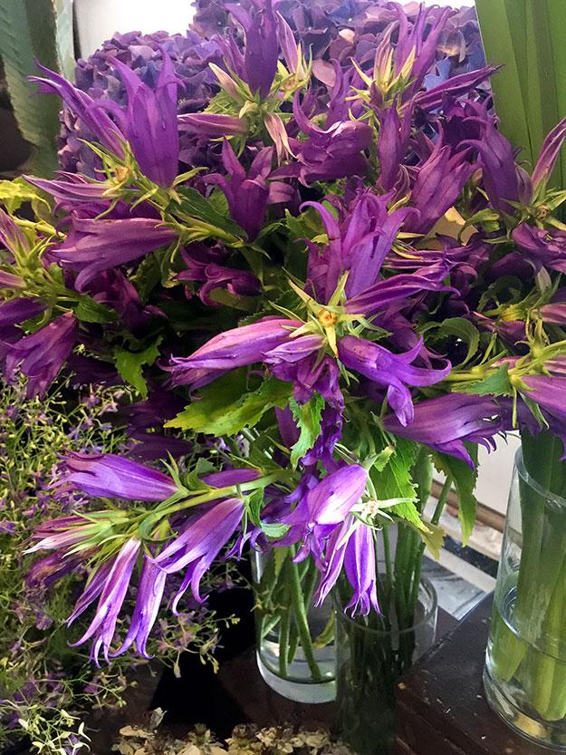 פרחים יפים בחנות פרחים מקסימה ברובע המארה