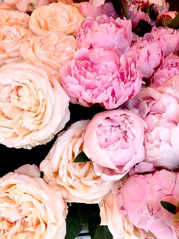 אדמוניות בחנות פרחים