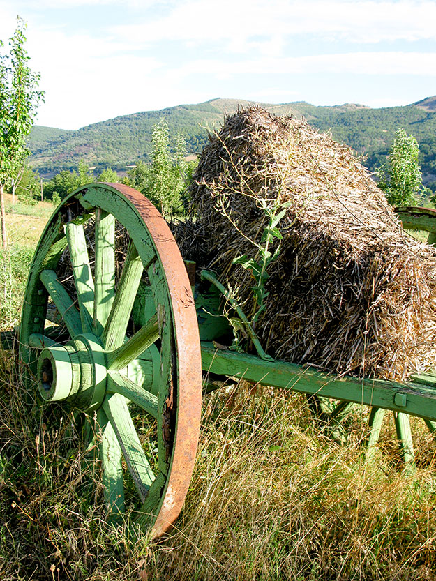 עגלה ירוקה בשדה חיטה בפרובאנס