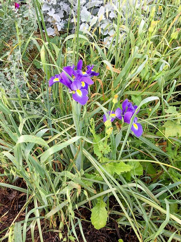 בגינה יש מקום גם לפרחים