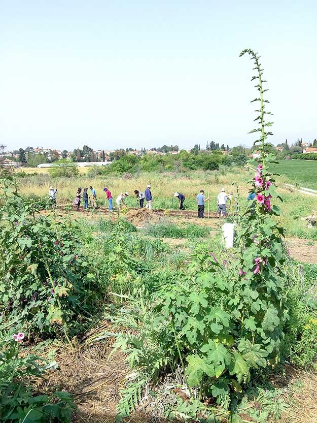 העבודה המעשית מאומצת בערוגות הגינה
