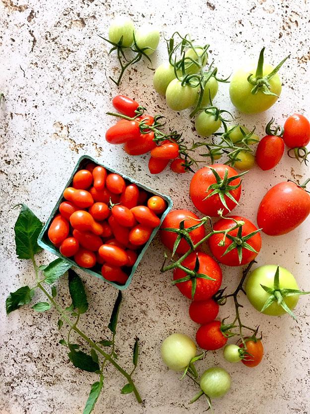 עגבניות צבעוניות שרי ועגבניות מורשת