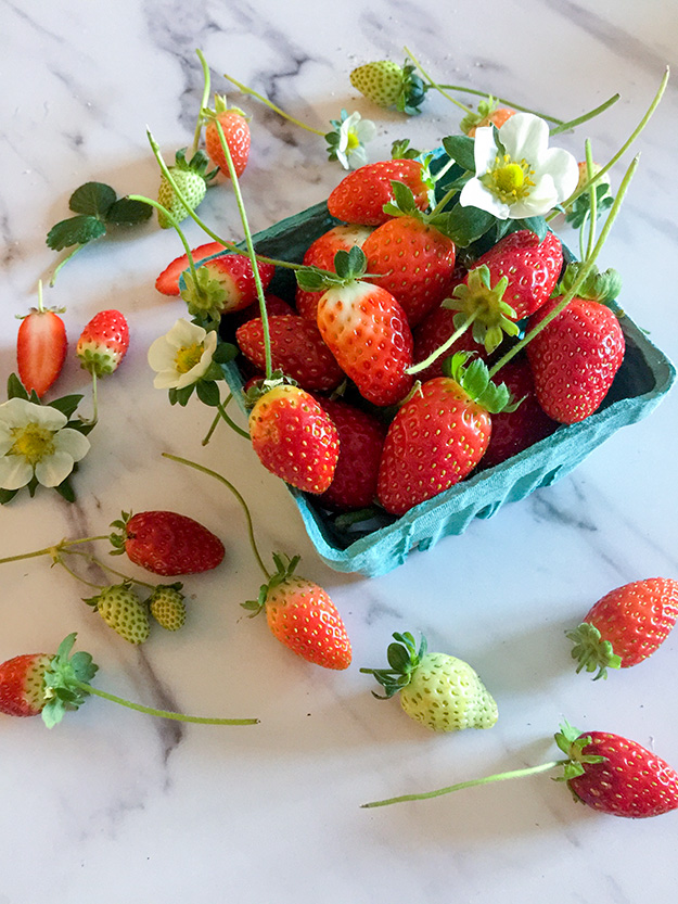 תותים טריים בסלסלה תכלת