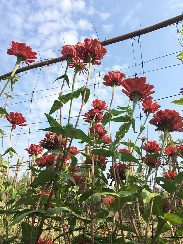 מדי עונה המראה של השדה משתנה ואיתו גם הגידולים, הפרחים והעצים מסביב