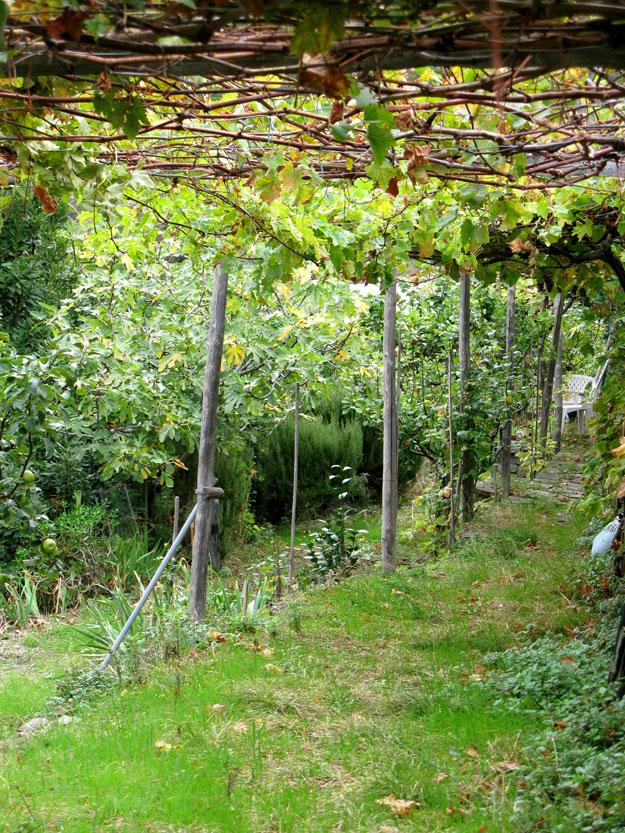 טרסות ירוקות, אורגניות בעיירה בהם מגדלים פירות וירקות עונתיים.