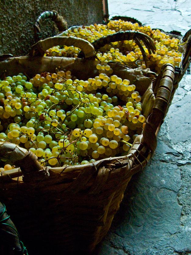 במנרולה, ליד הכניסה לבתים, הונחו סלים עמוסים בענבים בשלים, שמהם מכינים המקומיים וינו פרימיטיבו.