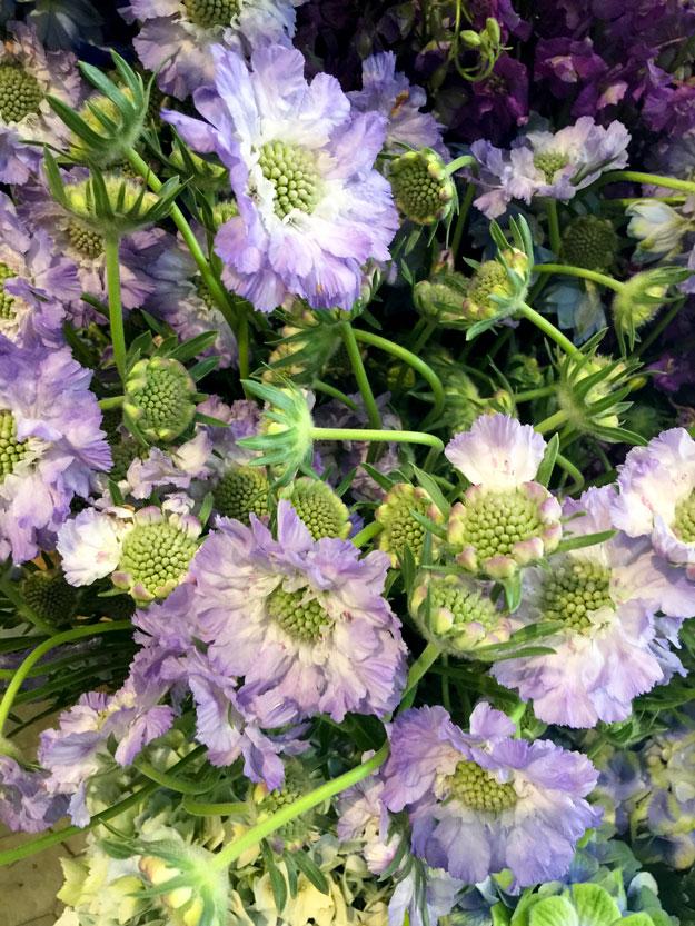 פרחי תגיות סגולות