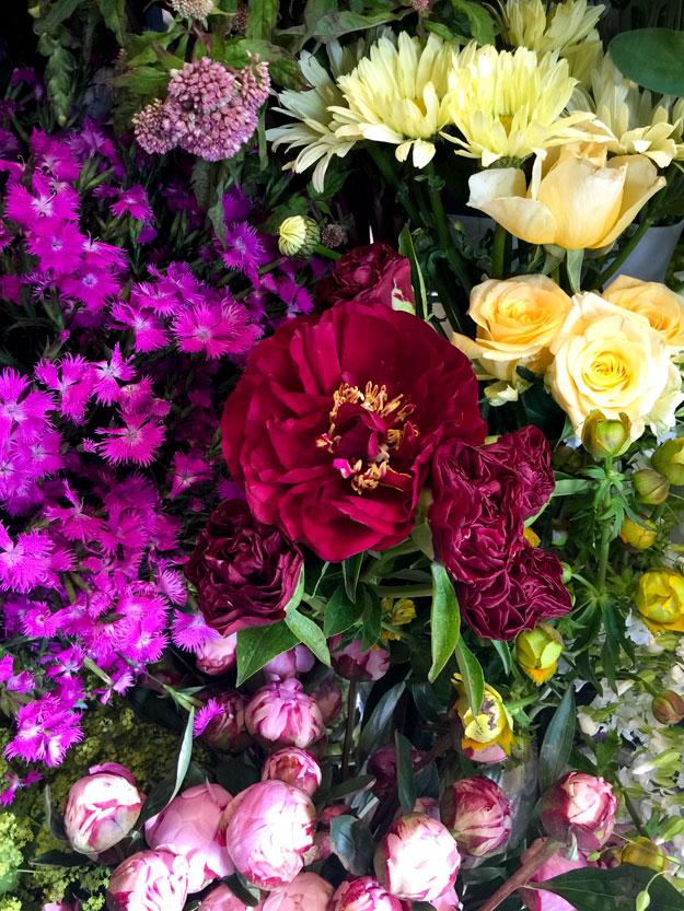 אגדמוניות ופרחים צהובים