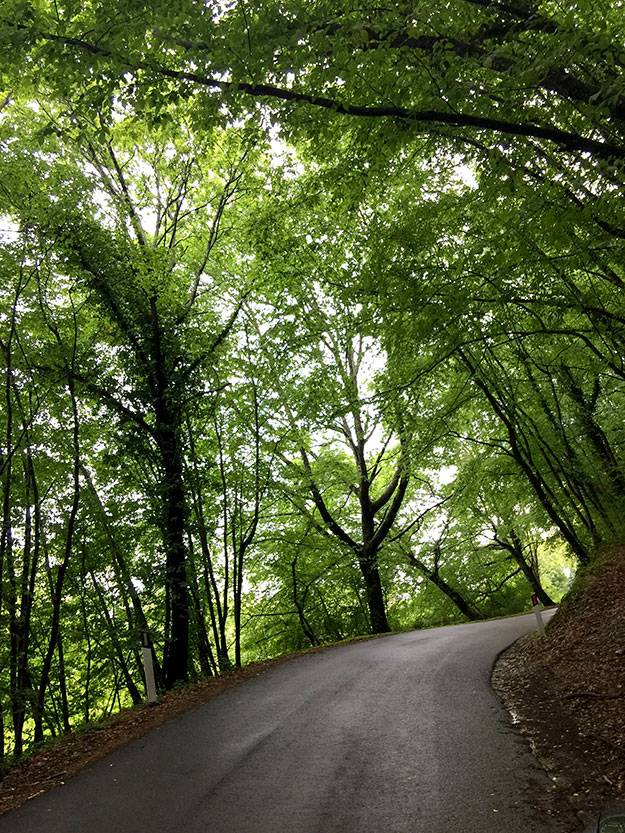 בדרך ליקב, עברנו במנהרה של עצים שיצרו חופה ירוקה מעל הכביש