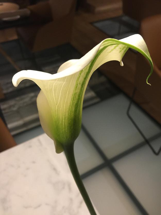 פרח במסעדה ארוחת טעימות במסעדת האחים טורס, מנה ראשונה של רביולי לובסטר בציר זעפרן, חכו יש עוד מנות
