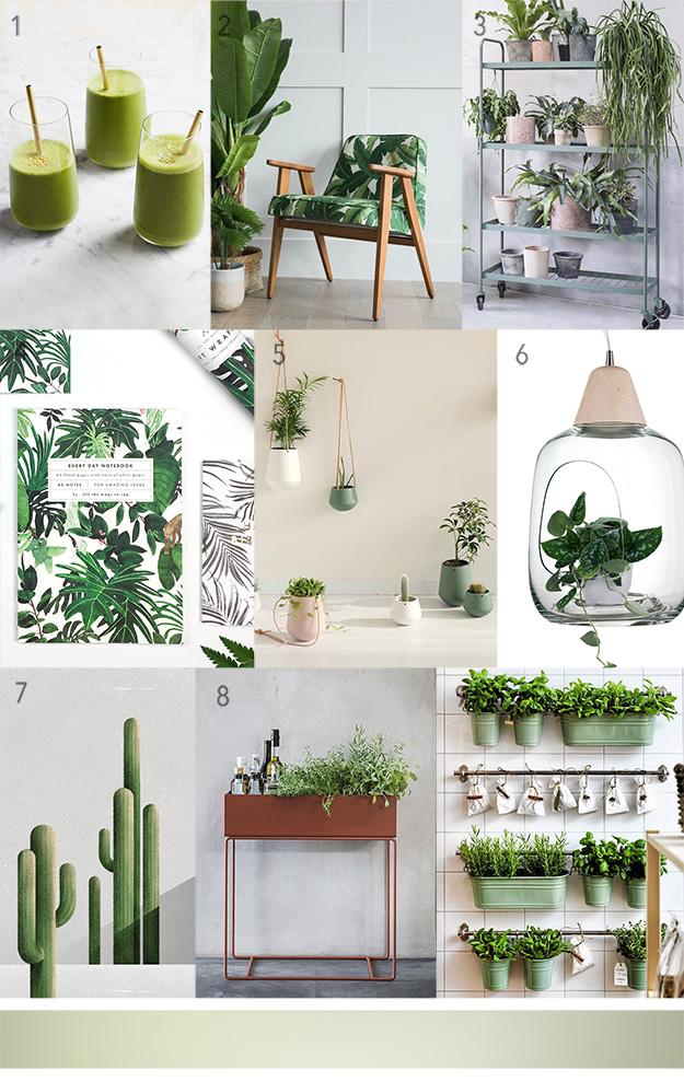 לוח השראה בוטני. הבית כג'ונגל אורבני פריטים ואבזרים לגידול צמחים בבית
