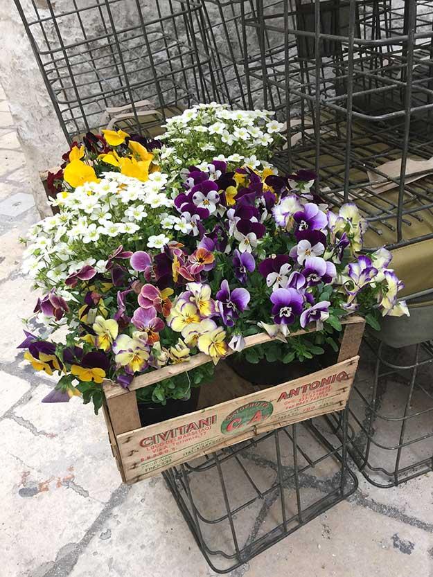 פרחים בסמטאות בארי