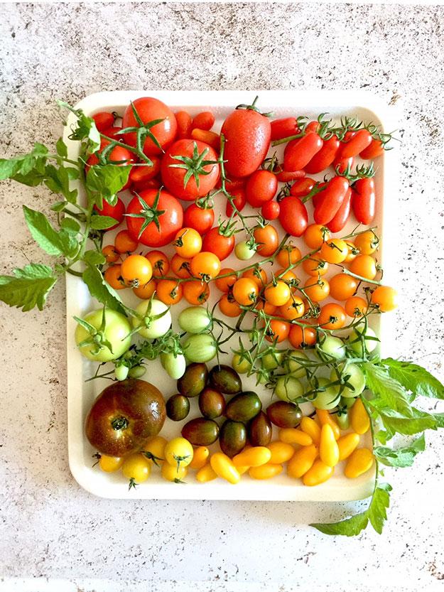 עגבניות קיץ נהדרות על מגש