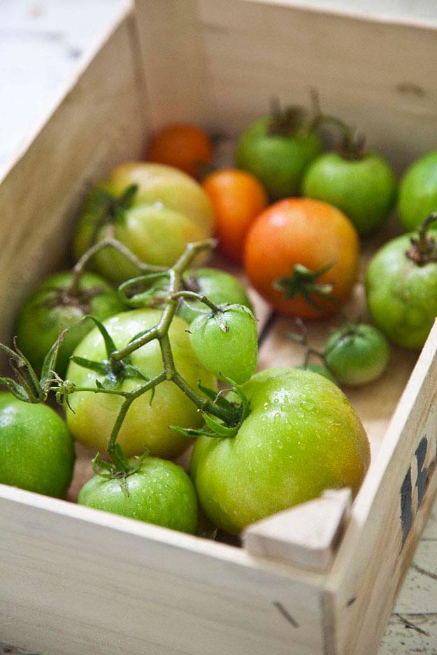 עגבניות מורשת בשיא הקיץ